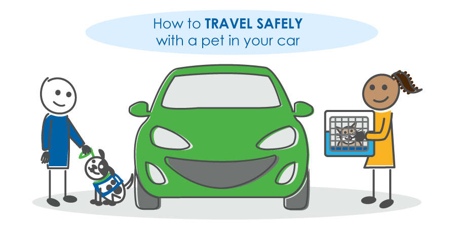 How to travel safely with a pet in your car